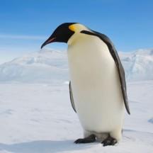 Happypenguin